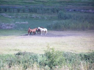 Where would ranch's be without horses File photo KDG