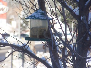 Feeders help Photo KDG