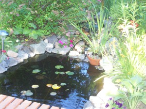 Fish pond, backyard File photo KDG
