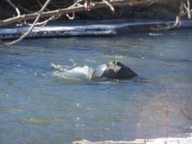 Coldwater River Merritt BC January 27