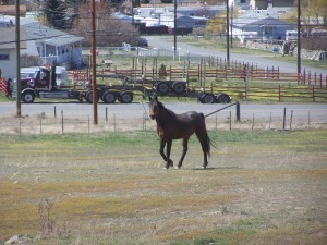 Local horses up for weather File Photo KDG