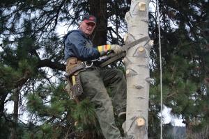 John Paul taking a tree down, bench area November File Photo KDG Photo KDG