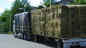 Some hay growers are saying that crops are ahead. Photo KDG
