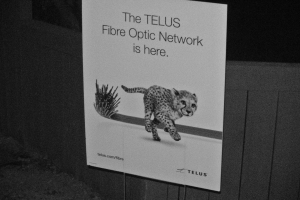 Telus making its presence known in Merritt. Photo KDG