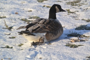 Broken leg Cold weather can hurt birds caught behind File Photo KDG