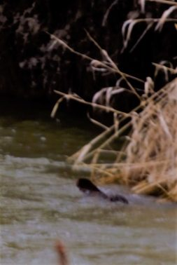 Otter Nicola River Merritt a good indcator of health File photo KDG